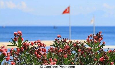 Oleander flowers and Turkish flag in Kemer