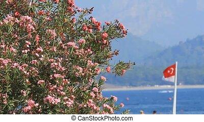 Oleander flowers and Turkish flag in Kemer,Turkey