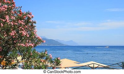 Oleander  flowers on the Mediterranean Sea in Kemer