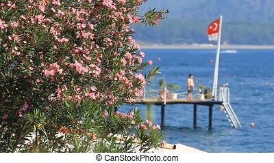 Oleander flowers on the sea and the Turkish flag in Kemer