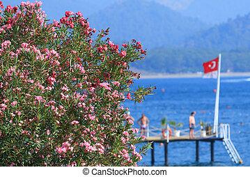 oleanders, flores, en, el mar de mediterranean, en, kemer