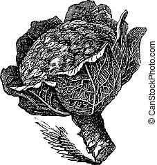 oleracea), aislado, bróculi, crudo, blanco, (brassica
