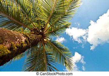 olhar, árvore, palma cima