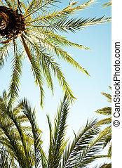 olhar, árvore palma, cima