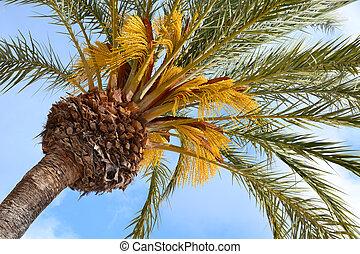 olhar, árvore palma, cima, vista