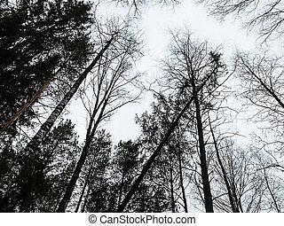 olhar, árvores, em, floresta