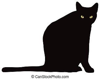 olhar, câmera, gato preto