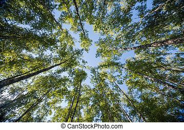 olhar, em, floresta, -, árvore verde, ramos, natureza, abstratos