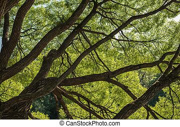olhar, em, floresta, -, árvore verde, ramos, natureza, abstratos, fundo