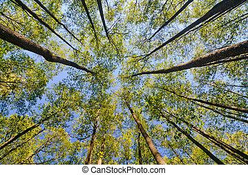 olhar, em, floresta