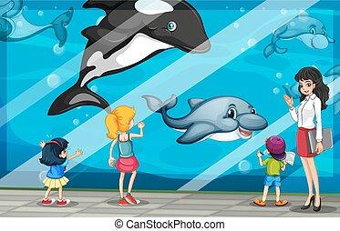 olhar, golfinhos, aquário, crianças
