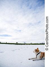 olhar, neve, cão, hiking, pessoas