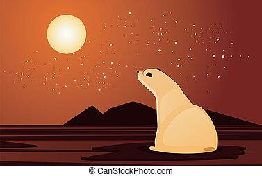 olhar, polar, pôr do sol, urso