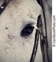 olho, de, um, horse.