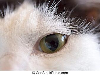 olho gato, cima