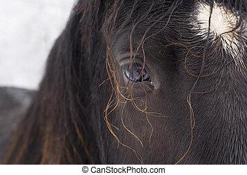 olho, horse.
