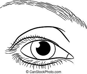 olho, ilustração, vetorial, femininas, monocromático, abertos