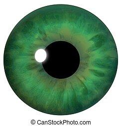 olho verde, íris