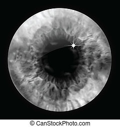 olho, vetorial, macro., cinzento, pupila