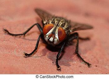 olhos, de, um, mosca