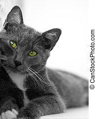 olhos verdes, gato