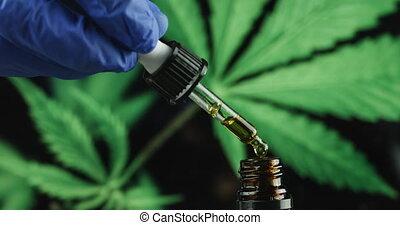 olie, wetenschapper, cbd, hand, hennep, het onderzoeken