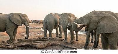 olifanten, hwange, nationale, kudde, park, zimbabwe, drinkt, waterhole, landscape, aanzicht