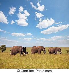 olifanten