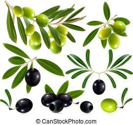 olijven, met, bladeren