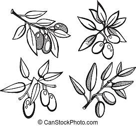 olijven, set, tekening