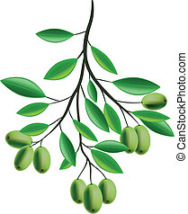 olijventak, illustratie