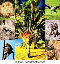olik, djuren, collage, på, vykort