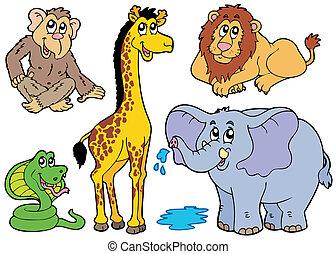 olika, afrikansk, djuren