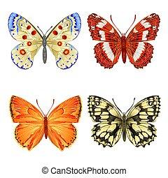 olika, fjärilar