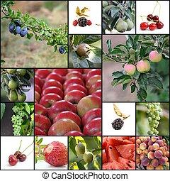 olika, frukter
