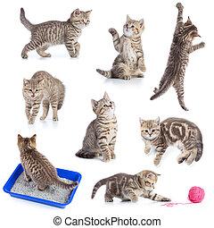 olika, rolig, katter, sätta, isolerat