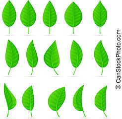 olika, slagen, och, formar, av, grönt lämnar