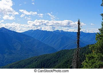 olimpico, cervo, parco nazionale, campeggio, vista