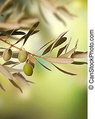 oliv, årgång, bakgrund
