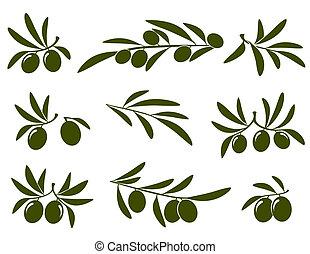 oliv, sätta, filial