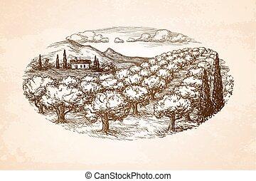 oliva, disegnato, mano, boschetto, paesaggio.