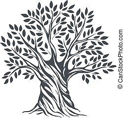 oliva, hand-drawn, schizzo