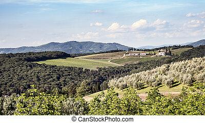 oliva, lesík, toskánsko, vinice