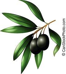 oliva, nero, ramo, frutte