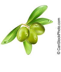 oliva, osamocený, dále, jeden, běloba grafické pozadí