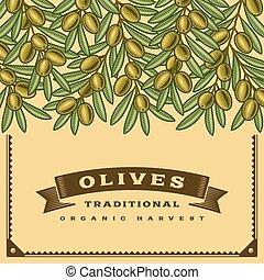 oliva, raccogliere, retro, scheda