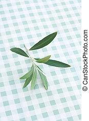 oliva, ramoscello, albero