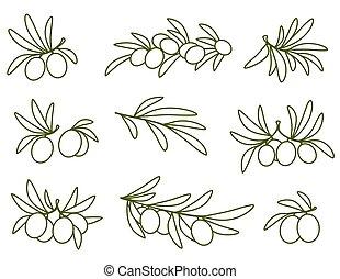oliva, set, lineare, ramo