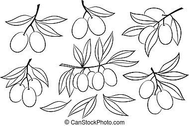 oliva, set, pictograms