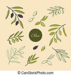oliva, set, rami